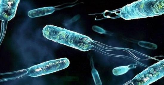 Бактерии вредные строение размножение клетка Бактерия
