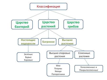 Отделы царства растений