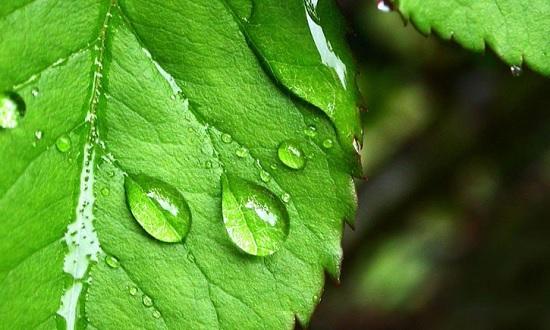 Внутреннее строение листа особенности растений Лист растения