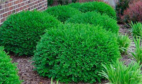 растения Многолетние растения