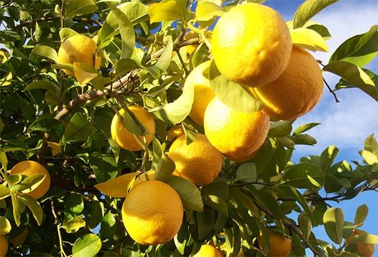 Плод строение развитие и классификация Строение и классификация плодов